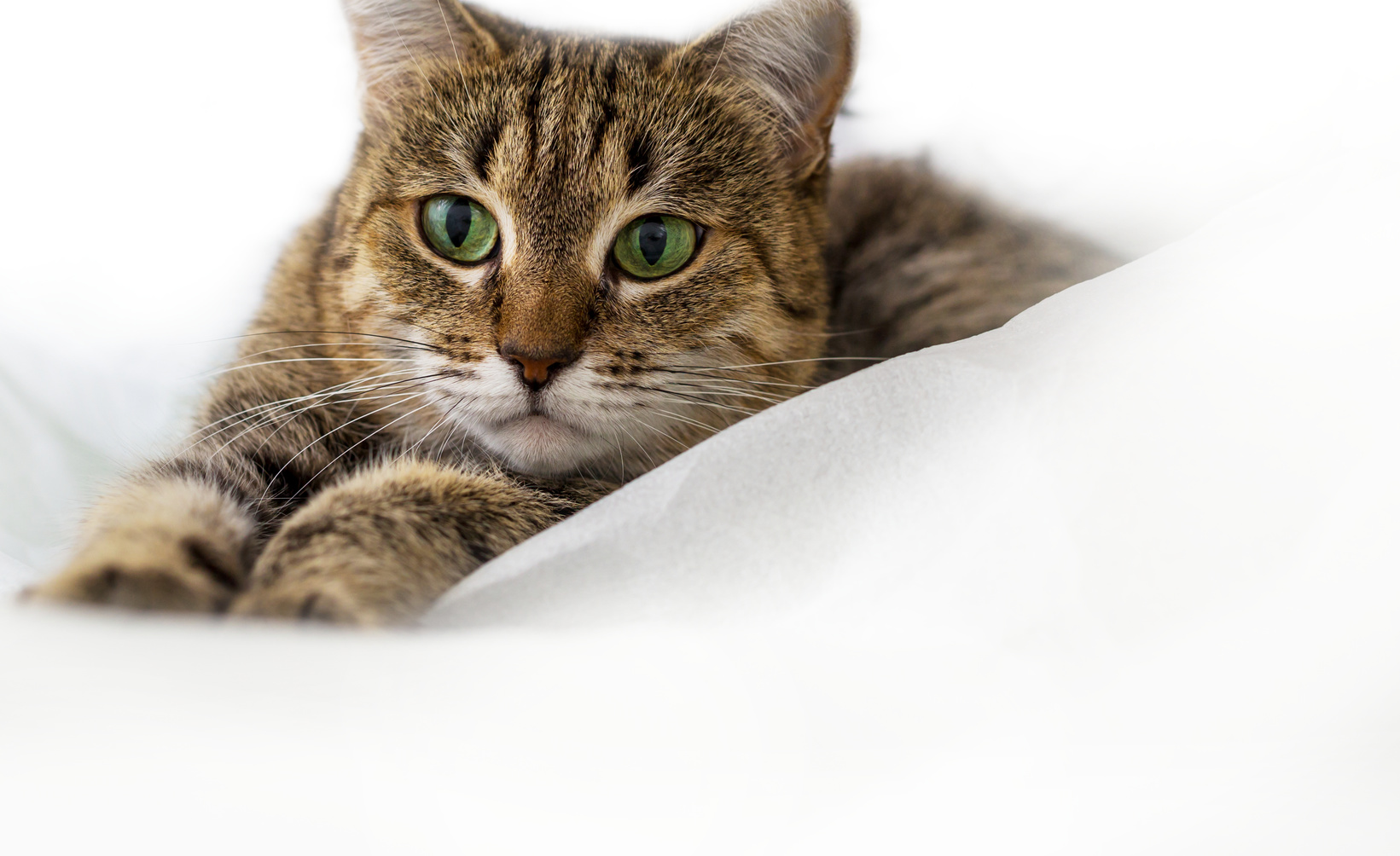 Content Marketing – The Nine Lives of a Single Topic
